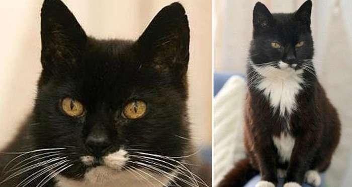 Умер самый старый кот в мире