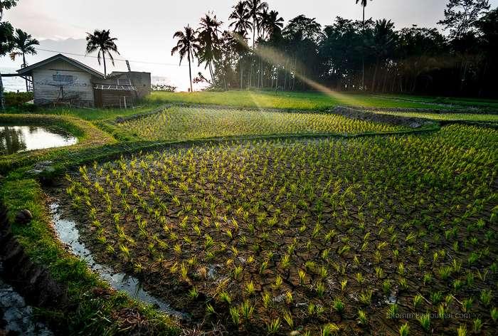 Путешествие в Индонезию