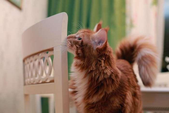 Поддаются ли коты воспитанию