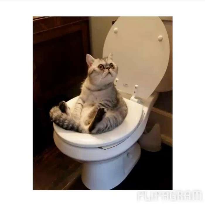 Сокровища белого трона. Самые необычные находки, которые обнаружили в туалетах