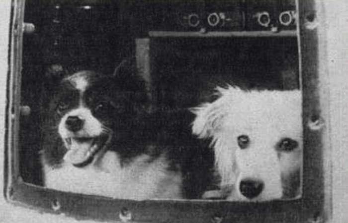 Дезик и Цыган &8211; первые животные, поднявшиеся к верхним слоям атмосферы