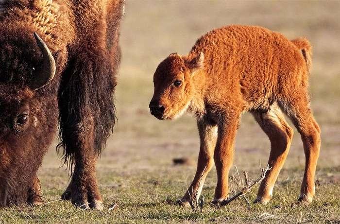Удивительные животные-гибриды
