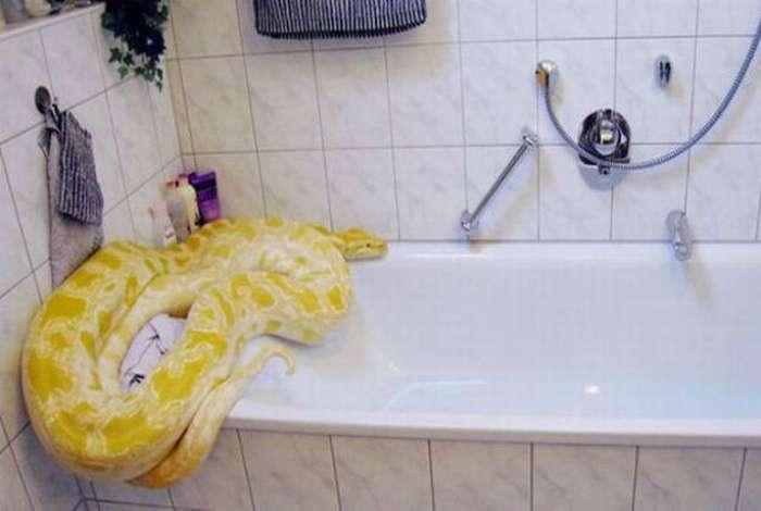 С легким паром: 19 забавных животных, которые принимают ванну, и им это явно нравится