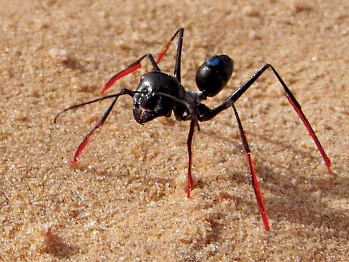 Оказалось, что муравьи&8230; (5 фото)