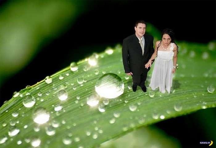 Жених обокрал тамаду на своей свадьбе