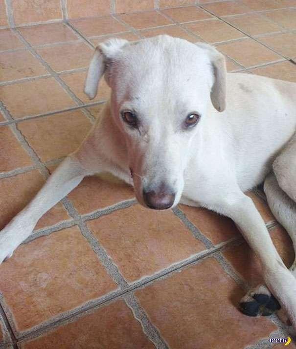 Собака-обоссака и её история