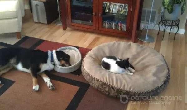 Забавные и милые, кошки и собаки (40 фото)