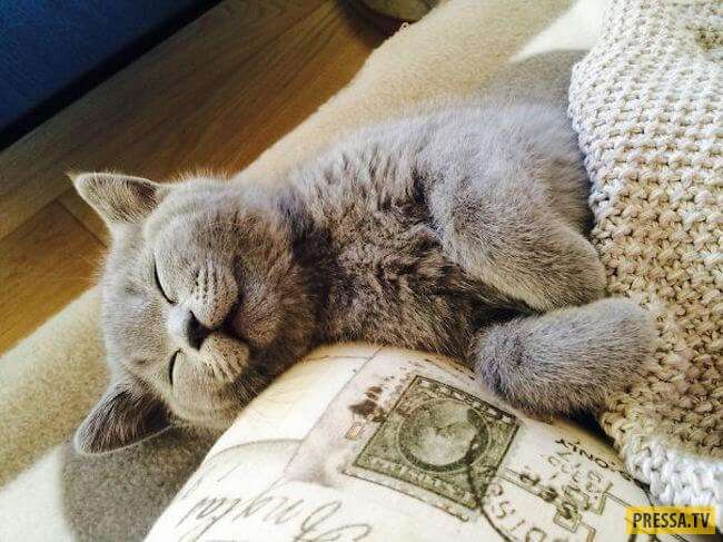 Эти кайфовые котики поднимут вам настроение на целый день! (25 фото)