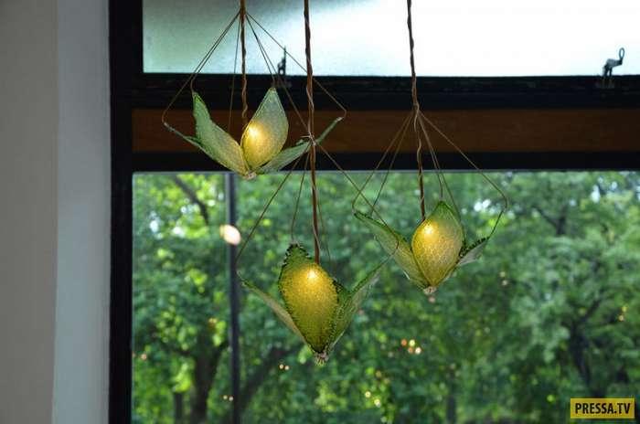"""""""Живая"""" лампа, которая очищает воздух (7 фото)"""