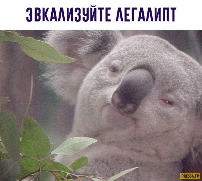 Смешные картинки с надписями (34 фото)