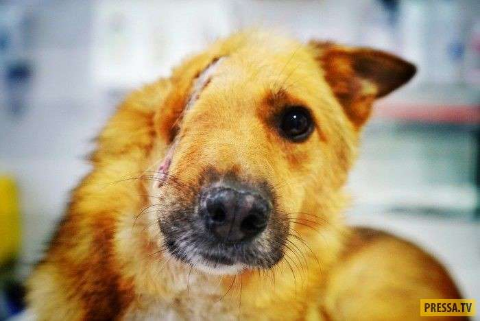 Изверг снес этому несчастному псу пол головы (3 фото + видео)