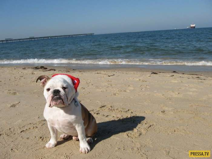 ТОП-9 веских причин завести собаку (10 фото)