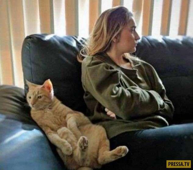 Смешные и милые котики (26 фото)
