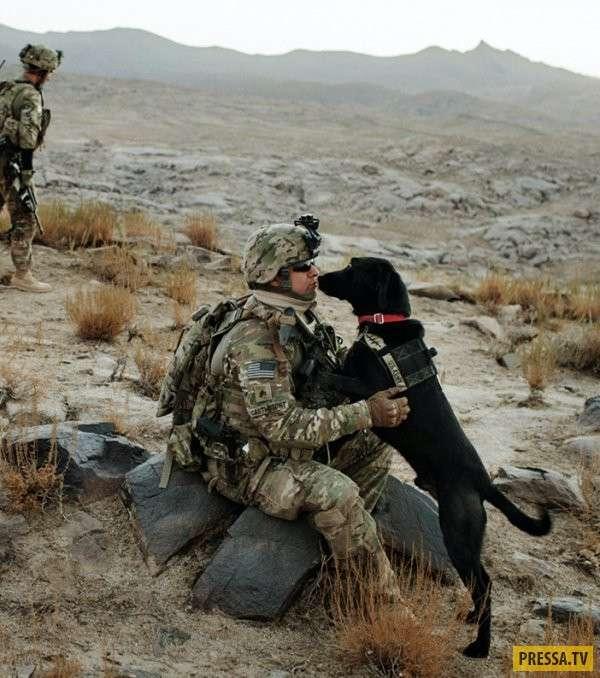 Начните день с улыбки служебной собаки (64 фото)