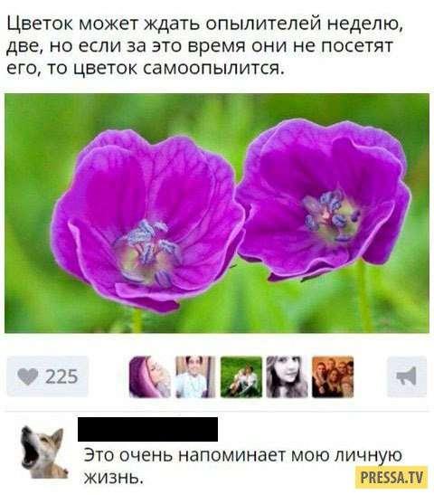 Смешные смс и комментарии из соцсетей (35 скринов)