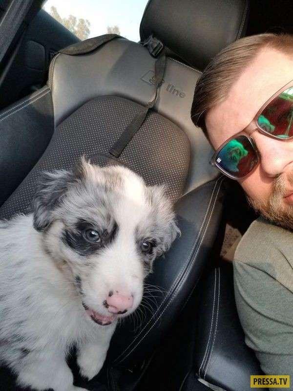 Счастливые моменты первой встречи с собакой (31 фото)