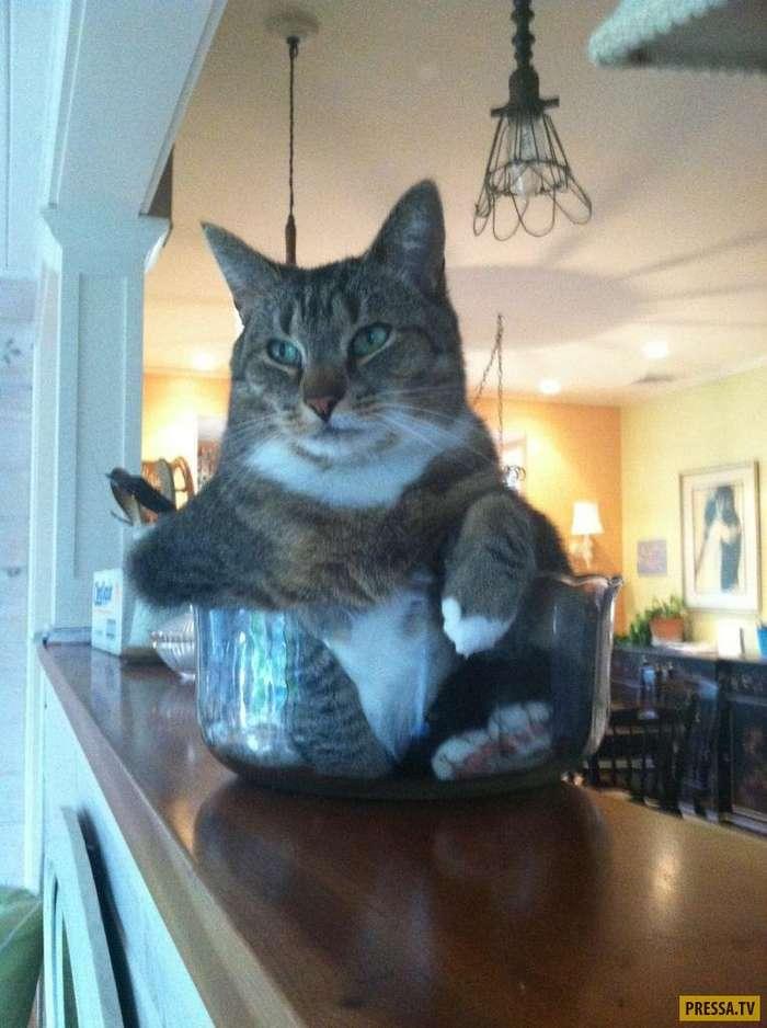 Фотографии котов, которые точно отображают почему мы их любим (24 фото)