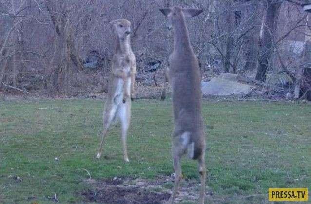 Интересные и забавные фотографии, диких животных (29 фото)