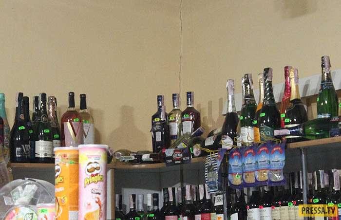 Еноты - алкоголики и дебоширы сбежали из цирка шапито (8 фото)