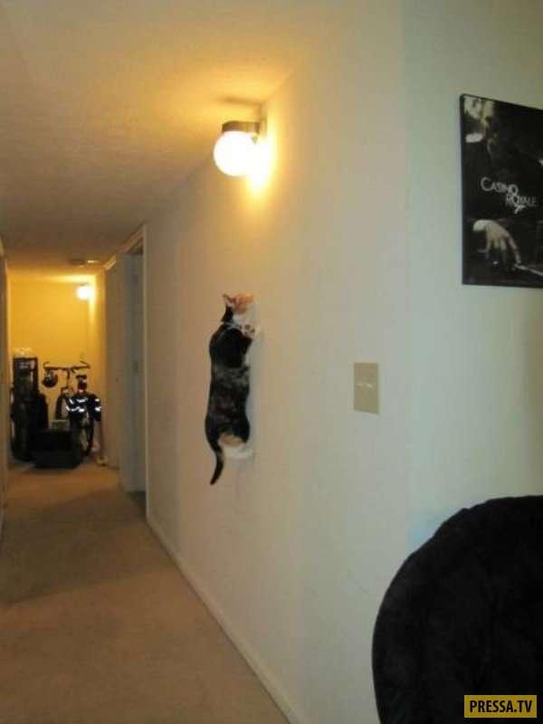 Забавные и смешные, коты и кошки (31 фото)
