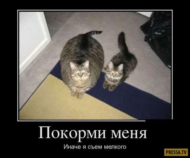 Смешные жизненные демотиваторы (41 фото)