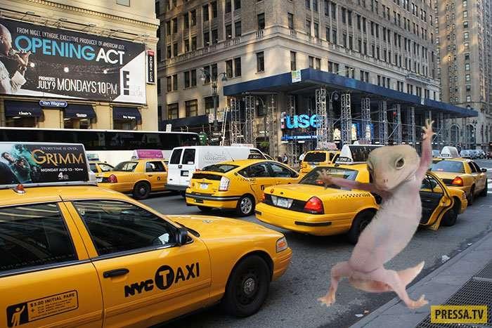Этот геккон стал звездой интернета за считанные часы (20 фото)
