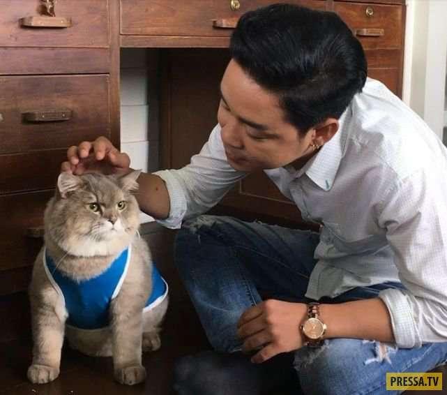Котик Бон-Бон - таиландская звезда Инстаграма (16 фото)