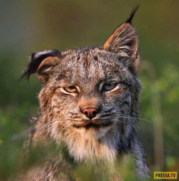 Ну очень нефотогеничные животные (41 фото)