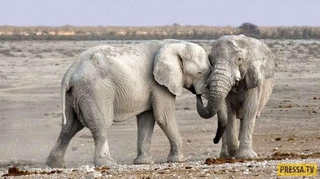 Топ 10: Животные, опасные для человека (10 фото)