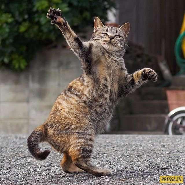 Коты-ниндзя в работах японского фотографа (35 фото)