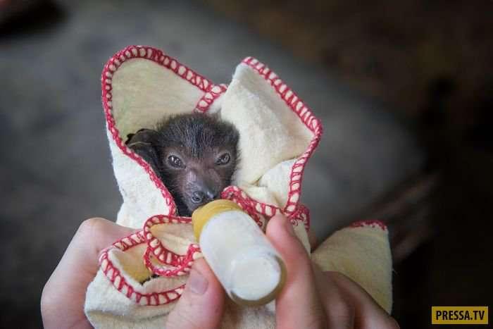 40+ мимимишных фотографий летучих мышей, которые навсегда изменят отношение к ним!