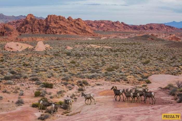 Яркие и выразительные фотографии живой природы (17 фото)