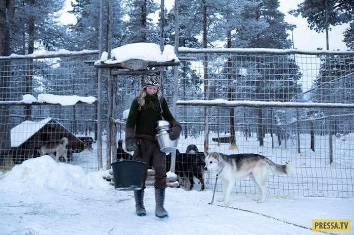 Арктическая любовь (21 фото)