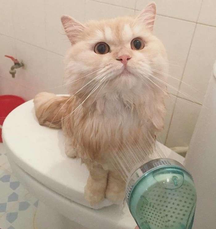 Этот кот просто обожает принимать душ