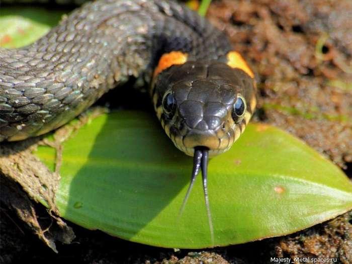 Топ-10 самых опасных змей в мире-11 фото-