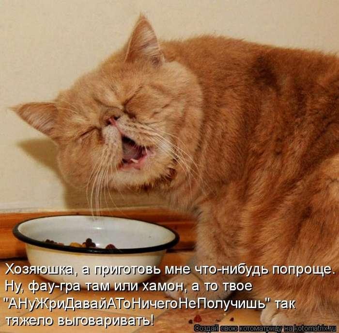 Как правильно воспитать кота-1 фото-