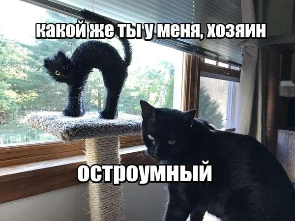 Смешные картинки и комментарии-43 фото-