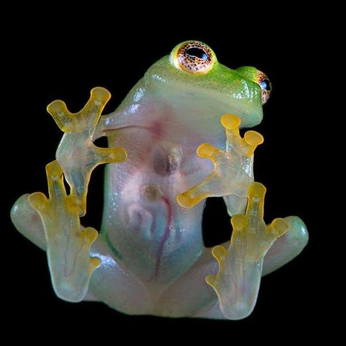 15 удивительных животных бассейна Амазонки-16 фото-