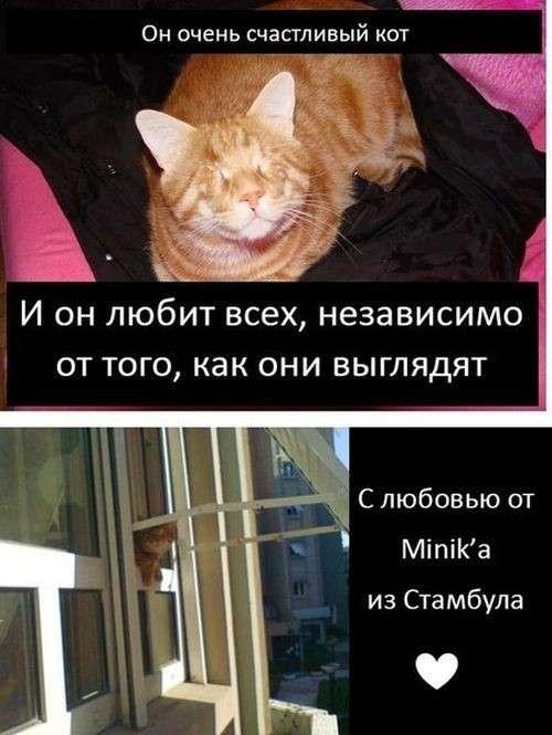 Грустная история счастливого кота-9 фото-
