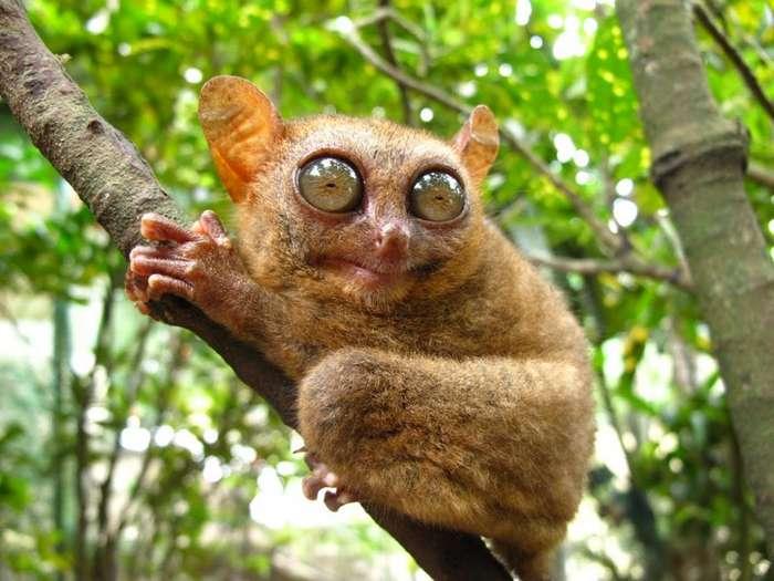 10 Удивительных животных мира-11 фото-