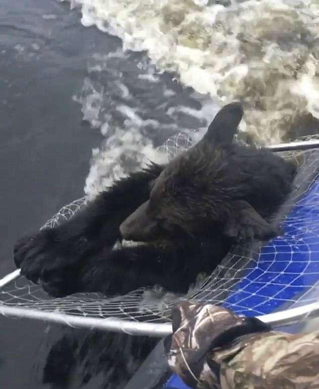 Винни Пух уже шел на дно… Рыбаки еле успели вытащить утопающего медвежонка!-5 фото + 1 видео-