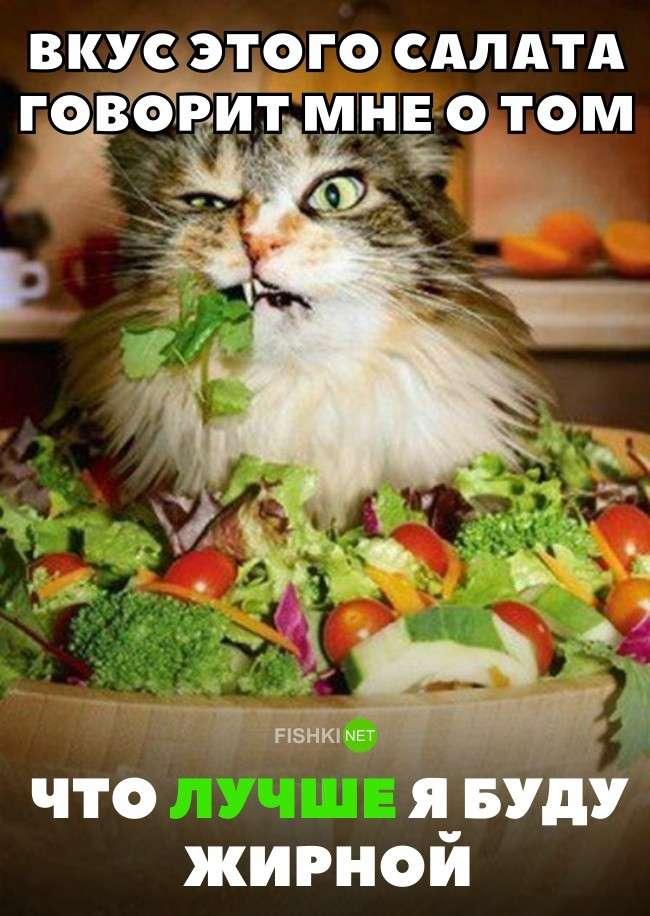Эти 16 забавных комиксов поймут только те, кто вечно сидит на диете-17 фото-