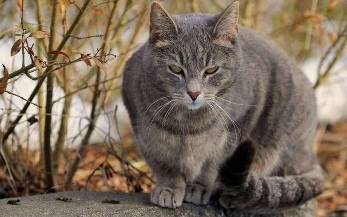 Истории, которые делают нас лучше: серый кот-10 фото-