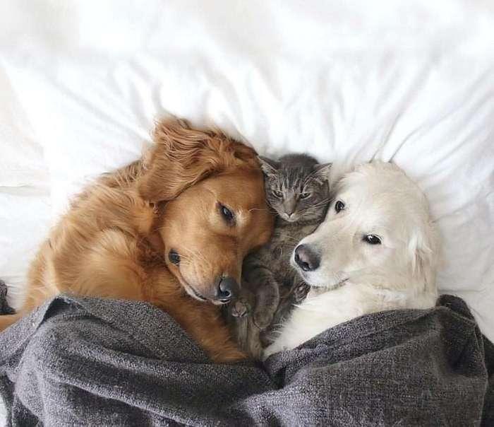 Коты в необычных местах-14 фото-