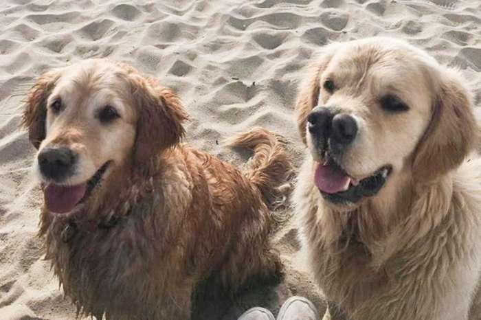 Пёс двумя носами нашёл дом из-за своей уникальной морды-6 фото + 1 видео-