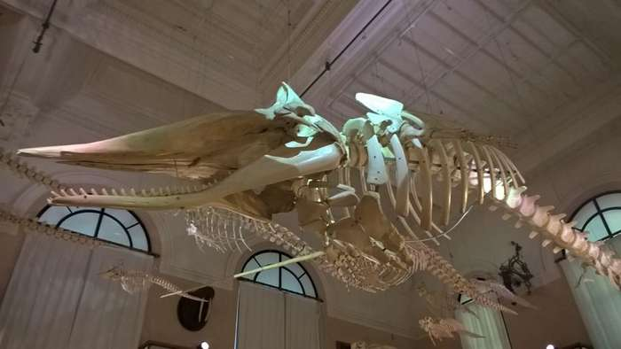 Океанографический музей Монако-26 фото-