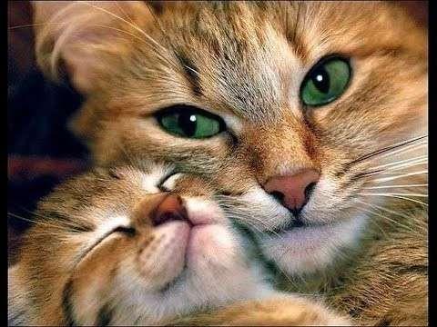 Счастливые мамаши-18 фото-