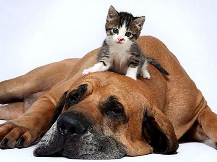 Сугубо положительные коты и собаки и некоторые другие персоны-41 фото-
