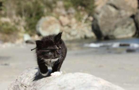 """""""ЙО-ХО-ХО и маленький котенок!"""" история одноглазого малыша, который выглядит в повязке на все 100-6 фото-"""