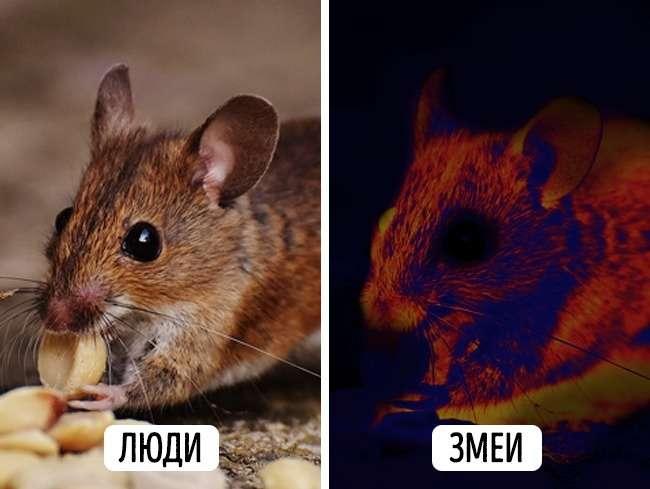 10фотографий отом, как видят наш мир животные илюди